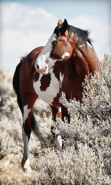 Painted Horse Art Print by Athena Mckinzie - Wildpferde/Mustangs - Horse Cute Horses, Pretty Horses, Horse Love, Most Beautiful Horses, Animals Beautiful, Cute Animals, Animals Sea, Morgan Horse, Wilde Mustangs