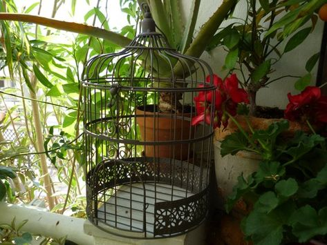 shabby chic birdcage hinged dome top small door rusty patina wire rh pinterest es