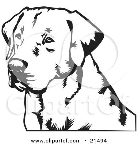 Clipart Illustration Of A Labrador Retriever Dog S Face Looking Off To The Left On A White Background By Dav Labrador Retriever Art Dog Drawing Dog Paintings
