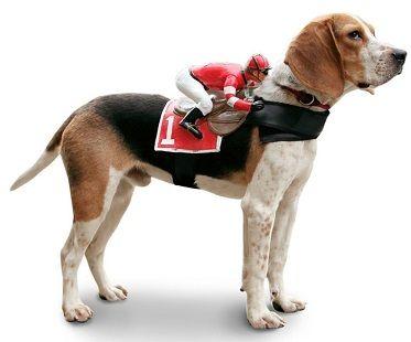 Jockey Rider Pet Costume Pet Costumes Pet Costumes For Dogs