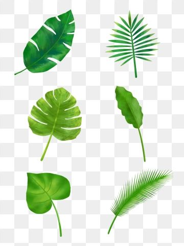 Green Tropical Plant Palm Leaf Border Border Clipart Palm Leaf Botany Png Transparent Clipart Image And Psd File For Free Download Leaf Clipart Leaf Background Plants