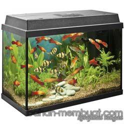 Cara Mudah Membuat Aquarium Sendiri Kerajinan Tangan Aquarium Fish Aquarium Tropical Fish Aquarium