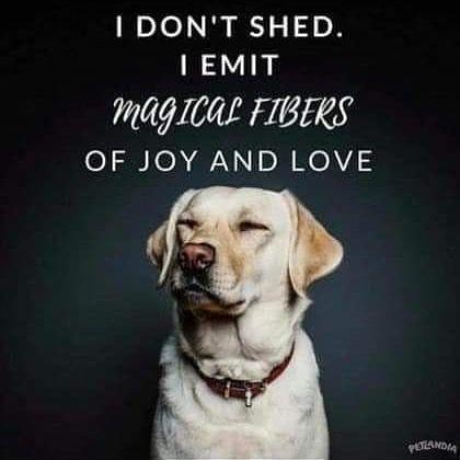 Hygena Scooper Bestseller Pet Scooper Dogsofinstagram