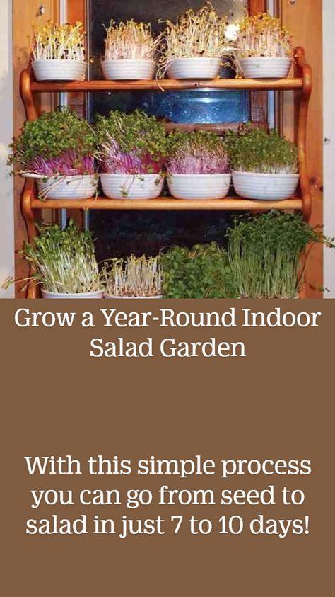 Grow a Year-Round Indoor Salad Garden