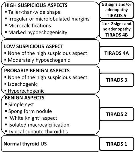 Figure 1. TIRADS classification algorithm [13].