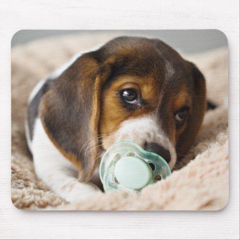 The Beagle Friendly Loyal And Loving Beagle Dogs Beagle