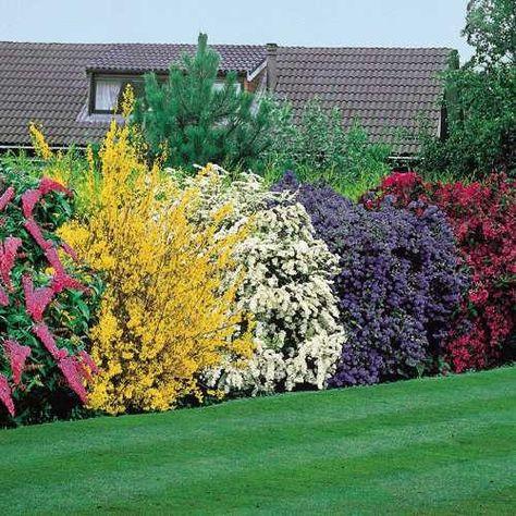 Hedge Butterfly Bush Forsythia Spirea Azalea Planting Shrubs Dream Garden Garden Inspiration
