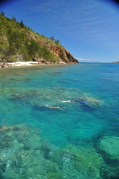 Snorkeling at Daydream Island Resort | • Whitsundays