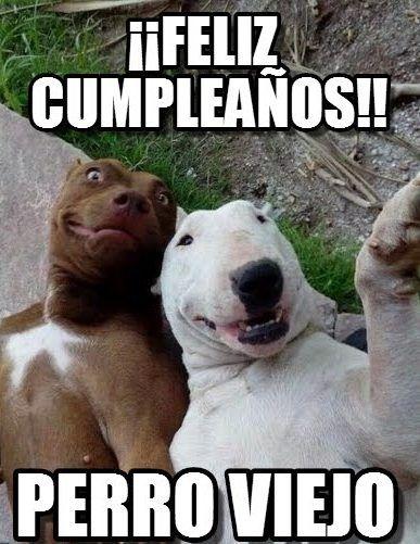 Memes De Cumpleanos10 Funny Animals Funny Animal Quotes Funny Animal Jokes