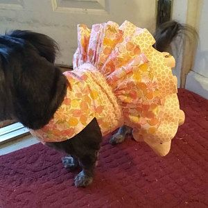 Dog Harness PRINTED Twirl Tiered Dog Dress Dog Clothes Sewing Pattern PDF Dog Dress Pet Clothes Tutorial
