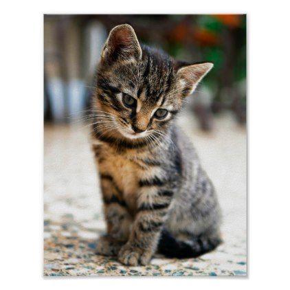 Kitten Photographic Poster In Colour Zazzle Com In 2020 Kitten Images Tabby Kitten Tabby Cat