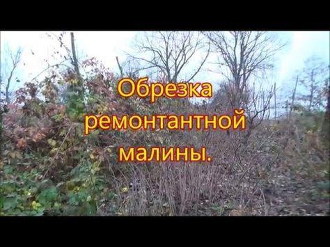 Обрезка ремонтантной малины осенью видео