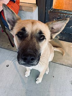Pet Details Petco Foundation Pets Petco Animals