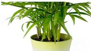 المهندس الزراعي مشاكل تربية النباتات المنزلية الداخلية Plants