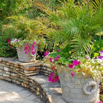 Palmen Im Topf In 2020 Garten Mediterraner Garten Italienischer Garten