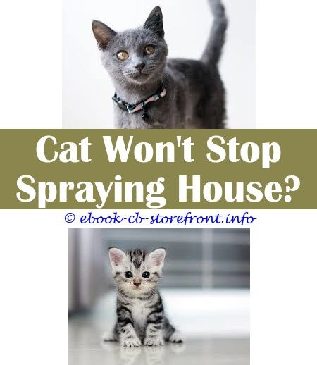 how to stop tom cat spraying in house