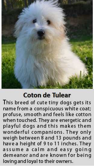 5 Outrageously Small White Dog Breeds Which You Will Love Instantly White Dog Breeds Cute Tiny Dogs White Dogs