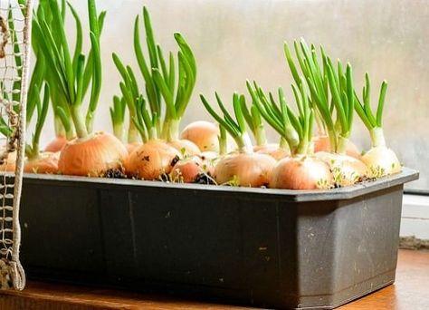 10 Indoor Vegetable Garden Ideas