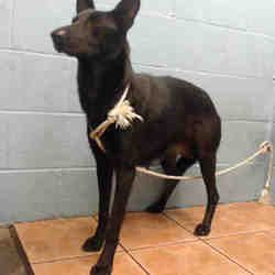 A Young Dog Still Just A Pup At 11 Months Of Age Is In Desperate Need Of Help His Name Is Rocky And He Is Located At The Los Angeles Count