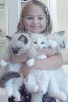 Cat Kittens Ducklings Cats And Kittens Northern Ireland Gatos Bonitos Gatos Gatitos Adorables