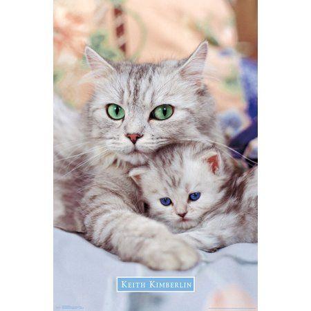 Home Cute Animals Cute Cats Kittens Cutest