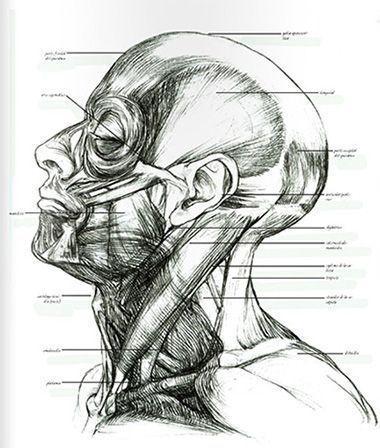 Como Dibujar El Cuerpo Humano 5 Libros De Anatomia Artistica Libros De Anatomia Arte De Anatomia Humana Libros De Dibujo Pdf