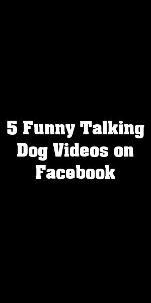 5 Funny Talking Dog Videos On Facebook Cute Animals Pets Funny