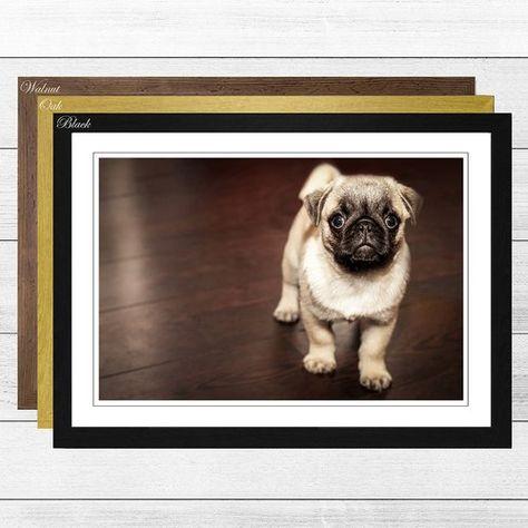 Big Box Art Pug Puppy Dog Framed Photographic Print Box Art
