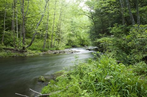 Gunpowder Falls State Park covers more than 18,000 acres of Harford and Baltimore counties. Established to protect the stream valleys of Big...
