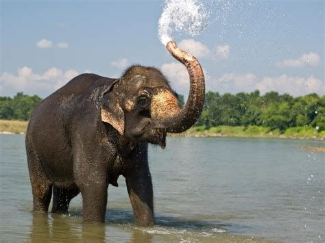 We Ve Gathered Our Favorite Ideas For Elephants Images Backgrounds