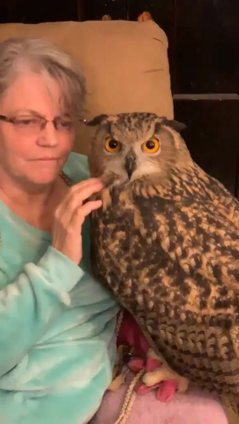 Woow, What a Cute Owl