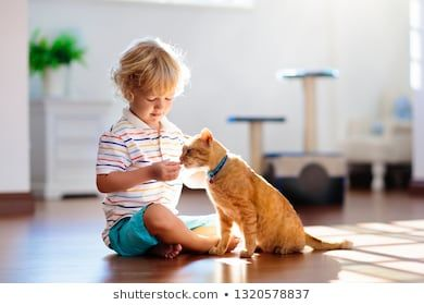 Child Playing With Cat At Home Kids And Pets Little Boy Feeding And Petting Cute Ginger Color Cat Cats Tree And Scratcher In L Kids Playing Animals For Kids Children