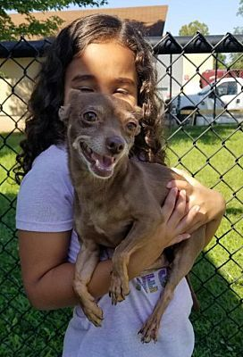 Perth Amboy Nj Chihuahua Meet Candy A Dog For Adoption Dog Adoption Chihuahua Dogs