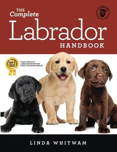 Ages And Stages In Labrador Puppy Training Labrador Retriever