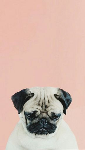 Pug Lockscreen Tumblr Dog Wallpaper Iphone Dog Wallpaper Pug Wallpaper