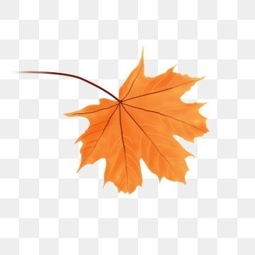 Hand Drawn Falling Autumn Leaves Red Maple Orange A Leaf Hand Drawn Autumn Leaves Hand Drawn Maple Leaf Or How To Draw Hands Leaf Clipart Maple Leaf Drawing
