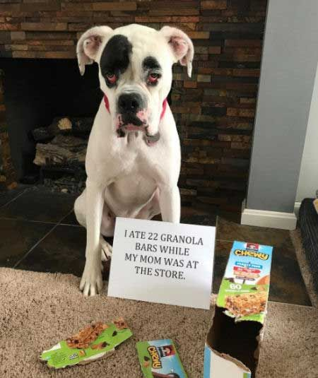 24 Of The Funniest Dog Shaming Signs That Will Make You Laugh Dog Shaming Dog Shaming Pictures Bad Dog