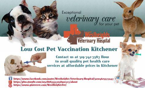 Pin On Animal Hospital In Kitchener