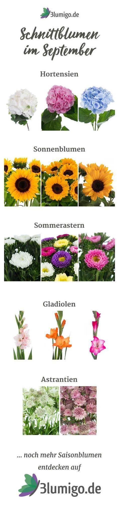 List Of Pinterest Floristik Sommer 2018 Images Floristik Sommer