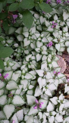Our favorite shade garden perennials shade perennials perennials discover top shade perennials mightylinksfo Gallery