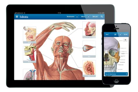 Sobotta Anatomie Atlas - The new Sobotta app | Anatomy App ...