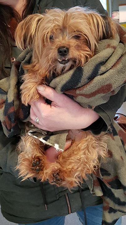 Sos Heute Wurden Wir Um Hilfe Gebeten Die Wir Nicht Abschlagen Konnten Und Wollten Teddy Ein Kleiner Reinrassiger Y Stubenrein Tierheim Tierschutz Hunde