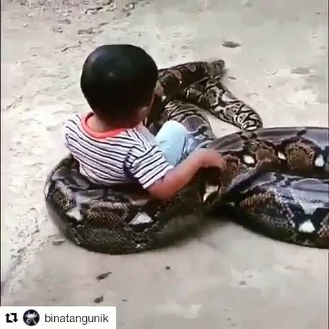 FOLLOW my account for more video. #nature #animal #video #videos #SNAKE #snake #cute