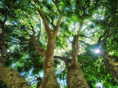 في ظل شجرة Tree Plants Shadow