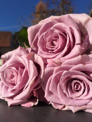 Wie Schnittblumen Langer Frisch Bleiben Blumen Stauden Rosen Altrosa