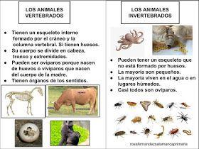 Maestra De Primaria El Reino Animal Y El Reino De Las Plantas Esquemas De Naturales Adaptados A Un Nivel De 3 Reino Animal Clasificación De Animales Animales