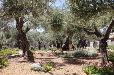 Was Ist Ein Judischer Garten Wie Erstelle Ich Einen Judischen Biblischen Garten Biblischen Einen Erstelle Garten Judische Garten Gartenarten Baumgarten