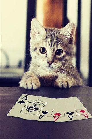 Poker Con Gatito Fondos De Pantalla De Iphone Descargas De Fondos De Pantalla Póker