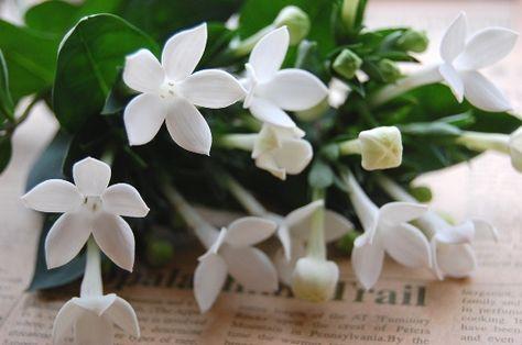 ブバリアの花言葉は 知的な魅力 初めて背骨の音を聞いた 花の名前 花言葉 季節の生花種類