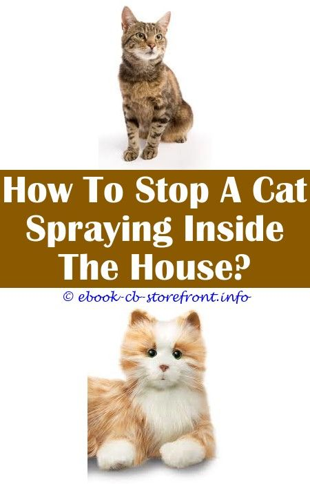 best spray to stop cats scratching carpets